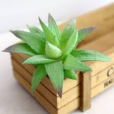 100 miniature indoor plants bamboo indoor plants garden