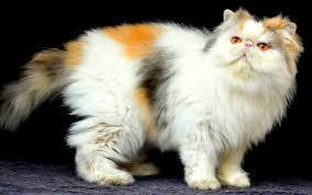 Sho Jamur sho jamur untuk kucing home sac pet shop perawatan kucing