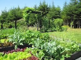 urban vegetable garden part 5 raised garden beds trellis
