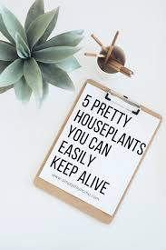 the 5 easiest houseplants simply stay home