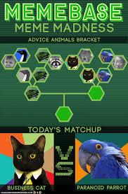 Paranoid Parrot Memes - meme madness business cat vs paranoid parrot rub mint
