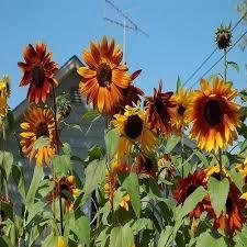 838 best ebay products images on pinterest gardening flower