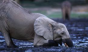 Blind Men And The Elephant Story For Children Wildlife And Climate Change Stories Wwf