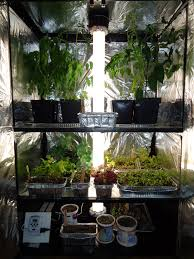 thyme to garden now indoor grow box limitations tomatoes