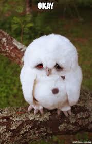 Sad Okay Meme - okay sad owl make a meme