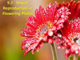 reproductive differences between gymnosperms and angiosperms