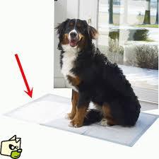 canap pour chien grande taille alèse pour chiens âgés malades ou incontinent