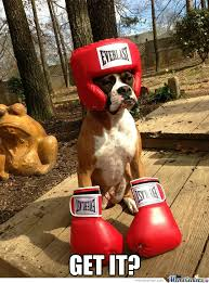 Boxer Meme - boxer memes best collection of funny boxer pictures