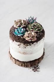 succulent cake gum paste succulents vanilla madeira cake