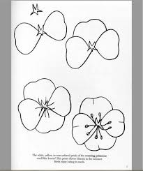 how to draw flowers poppies pinterest flowers drawings and