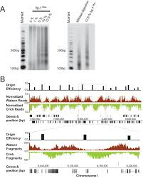 spatiotemporal coupling and decoupling of gene transcription with