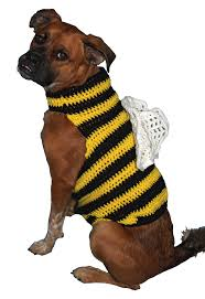 yorkie halloween costumes hooking on hump day u2013 halloween costumes bird brains u0026 dog tales