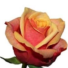 Bulk Flowers Online Bulk Roses Online U2013 Bloomsbythebox Com