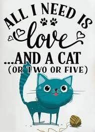 Awesome Quotes About Cats Being - 239 best kitty quotes images on pinterest beautiful cats black