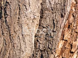 tree wood texture background pattern stock photos freeimages