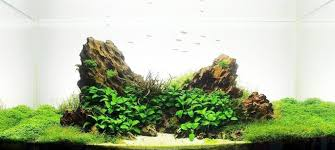 How To Aquascape A Planted Tank Water Archives The Aquarium Plant Blog