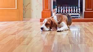 best floor for pets meze