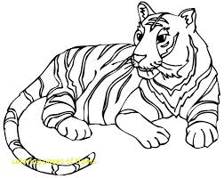 coloring page tiger paw coloring pages of tigers with coloring page tiger tigers coloring