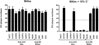 structural and functional characterization of anti a33 antibodies