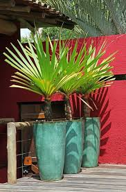 189 best container garden images on pinterest plants