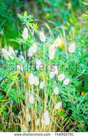 bunnies grass stock images royalty free images vectors