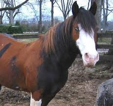 175 best a horse of a different color images on pinterest pretty