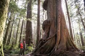 big tree tours