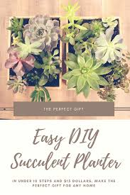 diy succulent planter steph u0026 home diy thoughts inspiration