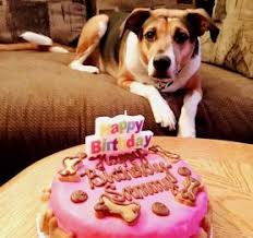 birthday cakes for dogs no hide chicken the barkery birthday cakes for dogs