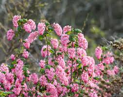 list of california native plants native plants what are they plus 5 top benefits