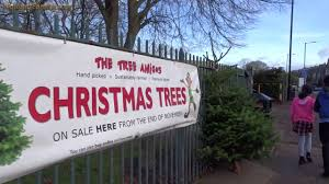 real christmas trees for sale endcliffe park sheffield december