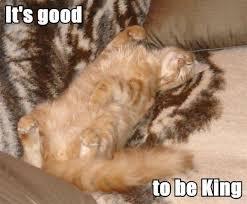 Good Cat Meme - its good cat meme cat planet cat planet