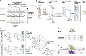 deep learning for computational biology molecular systems biology