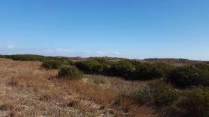 grassland native plants welcome to vnps org virginia native plant society