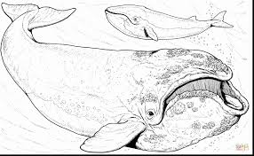 Wonderful Bowhead Whale Coloring Page With Whale Coloring Pages Whale Color Page