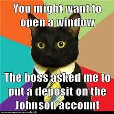 Anxiety Cat Meme - roll on it i 3 business cat pinterest roll on
