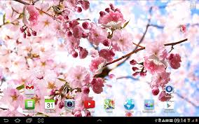 Cherry Blossom Map Sakura Live Wallpaper Android Apps On Google Play