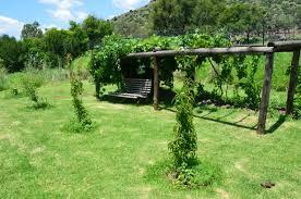 catawba grape jelly vastrap farm