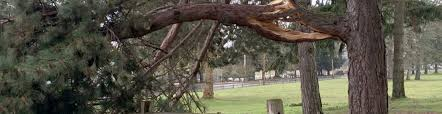 dealing with damaged trees inexpensive tree care