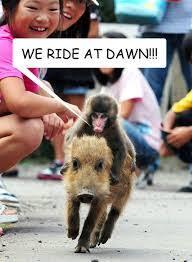 Baby Monkey Meme - monkey riding a pig