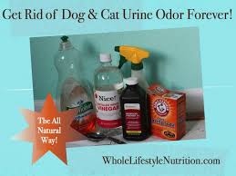 get rid of and cat urine odors the all way whole