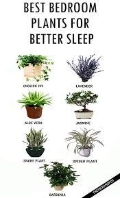 Best Plants For Bedroom | best plants to keep in your bedroom to help you sleep plants