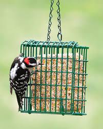 plainwell garden center bird feeders and seed