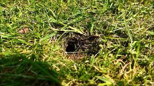 bumble bee underground nest youtube