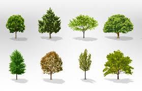 treefolks may a free tree for your yard rosedale neighborhood