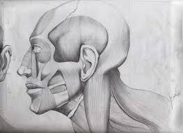 human face side view by jp ocampo on deviantart