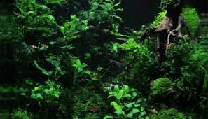 Aquascape Design 50 Aquascape Aquarium Design Ideas Meowlogy