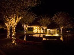 Outdoor Up Lighting For Trees 56 Best Outdoor Tree Lighting Images On Pinterest Outdoor Tree