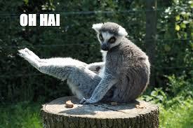 Lemur Meme - lemur memes the real sasha