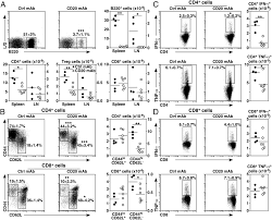 acute and chronic b cell depletion disrupts cd4 and cd8 t cell